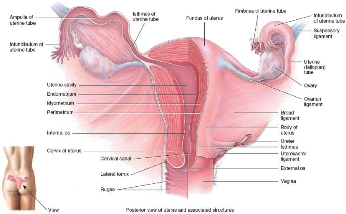 vaginal-discharge