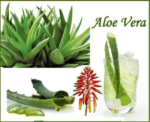 Top 10 Health Benefits of Aloe Vera