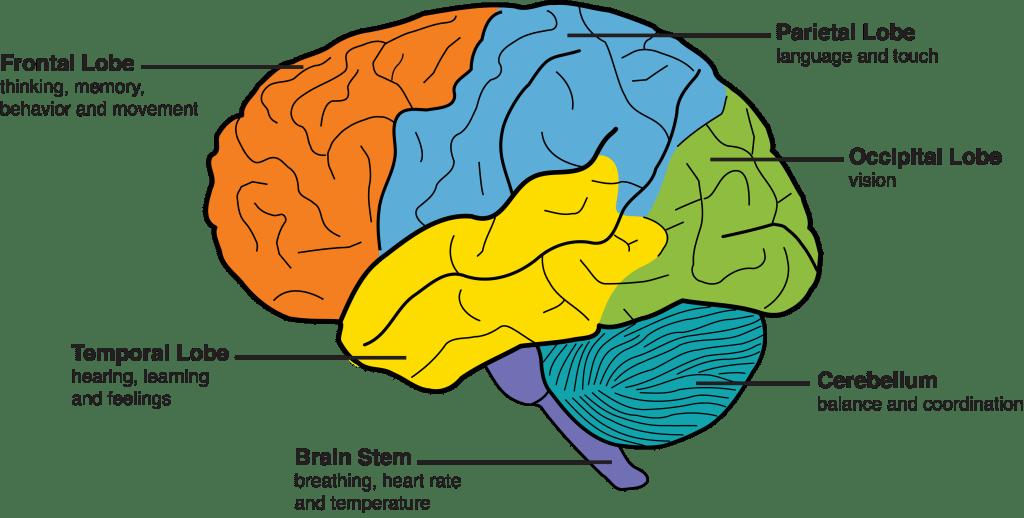 Dementia,5 Foods to Fight Dementia .