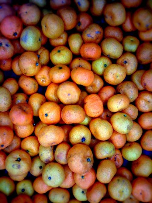 30jan_jeruk jeruk jeruk