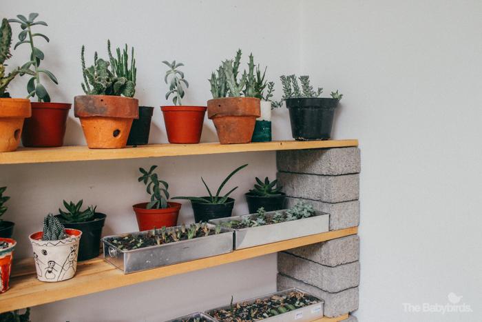 kaktus-4
