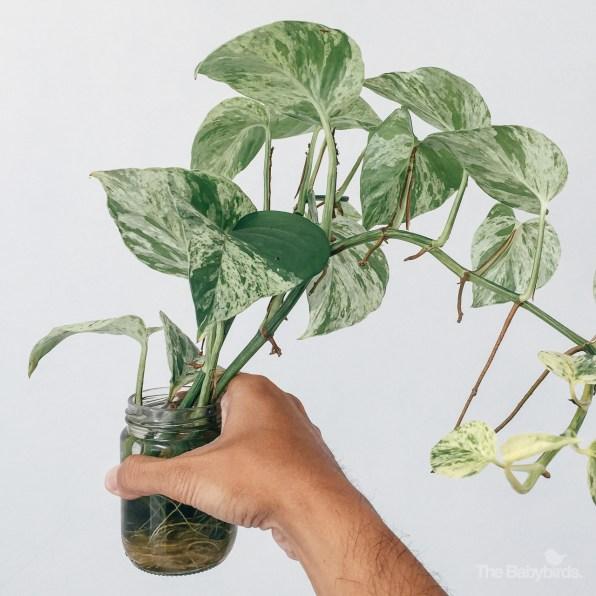gardening-7