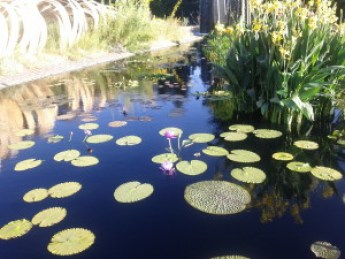 Botanic Gardens3
