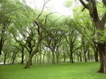 spring grass trees
