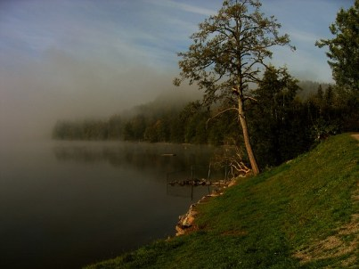 black-forest-123639_640