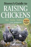 Raising Chickens Picture