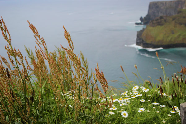CLIFFS-OF-MOHER-15