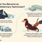 Career Profile U S Army Veterinary Technician