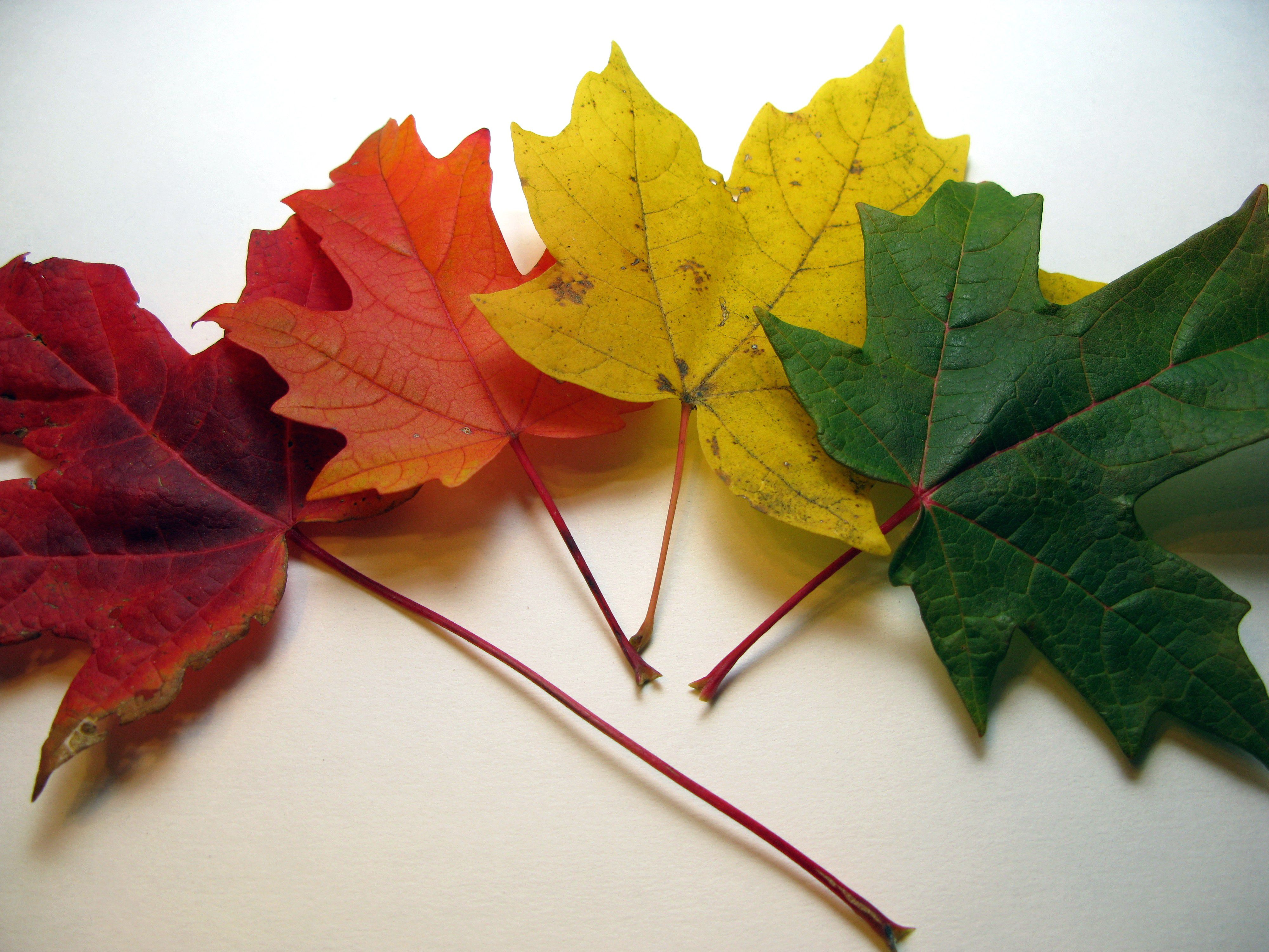 6 Ways To Use Leaves In Your Garden