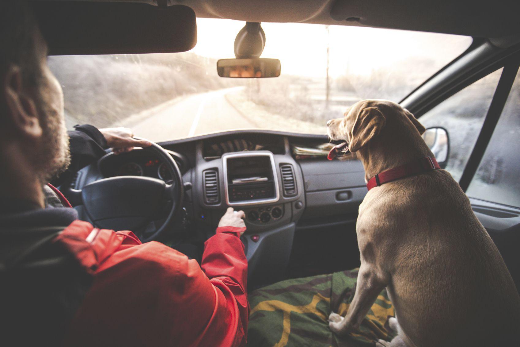 Strategies To Lower Your Auto Insurance Premium