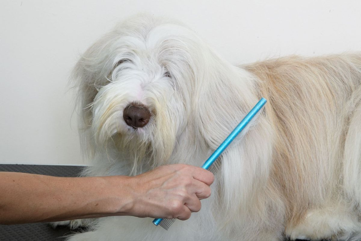 The Pros and Cons of Starting a Pet Grooming Business