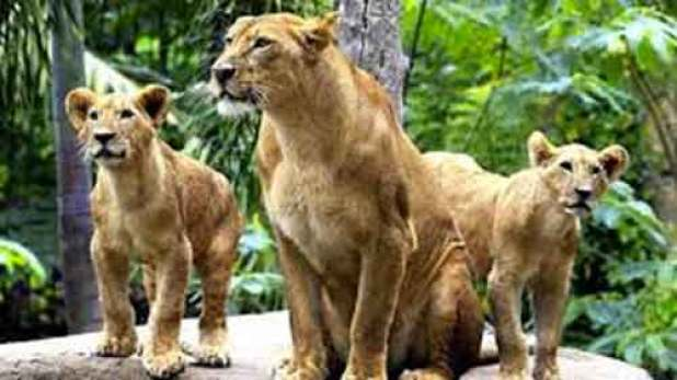 Zoo Admission Bali Zoo Park Bali Zoo Park Packages