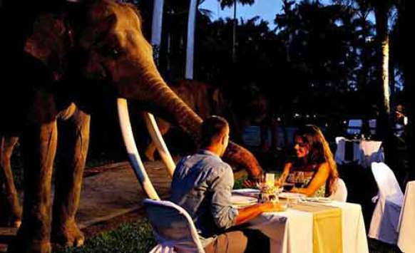 Image result for dinner with great elephant bali