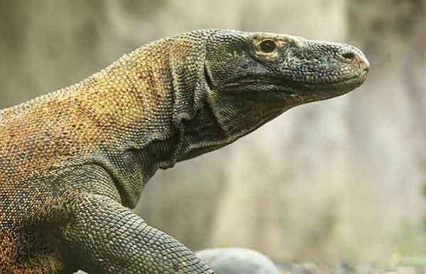 Bali Safari Marine Park Dragon Package Zoo Park Adventure