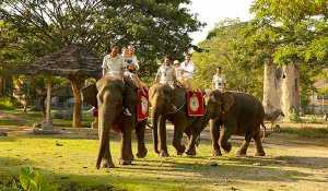 Bali elephant riding | The Bali Package