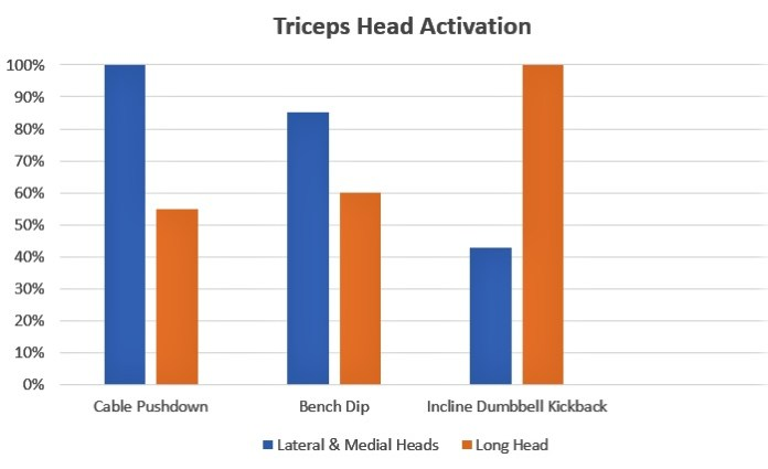 scientific graph of triceps head activation in best triceps exercises