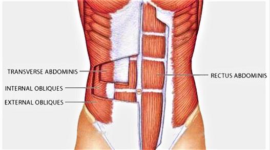 abdominal anatomy chart