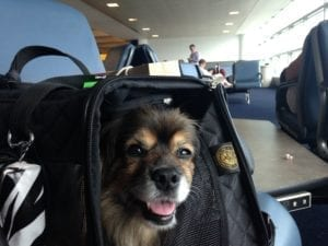 dog travel tips carrier image