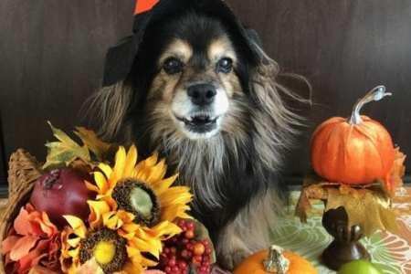 Thanksgiving Dog Image