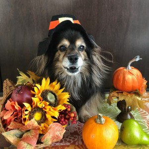 Thanksgiving Dog Image