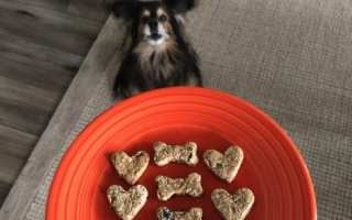 Dog with cookies imagae