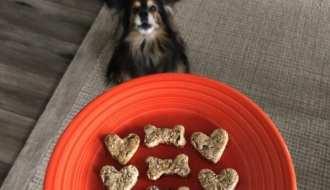 Dog with cookies imagae