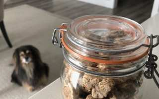 small dog looking at cookie jar photo