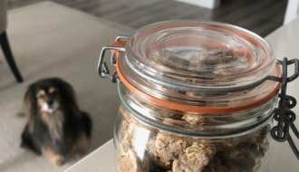 dog cookie jar photo