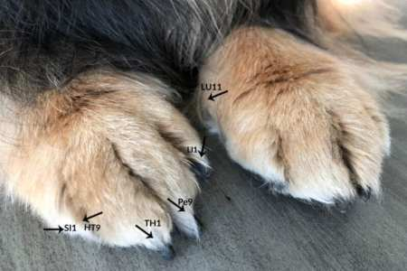 canine jing well points on dog paws