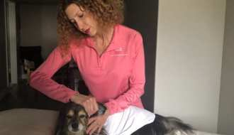 image of small dog on massage table getting acupressure on ears by woman in pink shirt