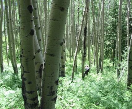 Basin & Range Magazine's Mountain Dispatch: West Elk Wilderness