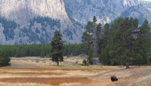 Understanding Public Lands and Why They Matter: Part 2