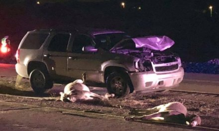 Two Burros Killed In Early Morning Crash