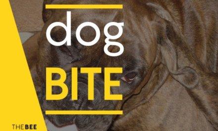 BULLHEAD – DOG BITE