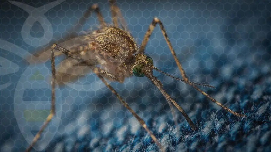 MOSQUITO SURVEILLANCE DETECTS POSITIVE WEST NILE VIRUS IN LAKE HAVASU CITY