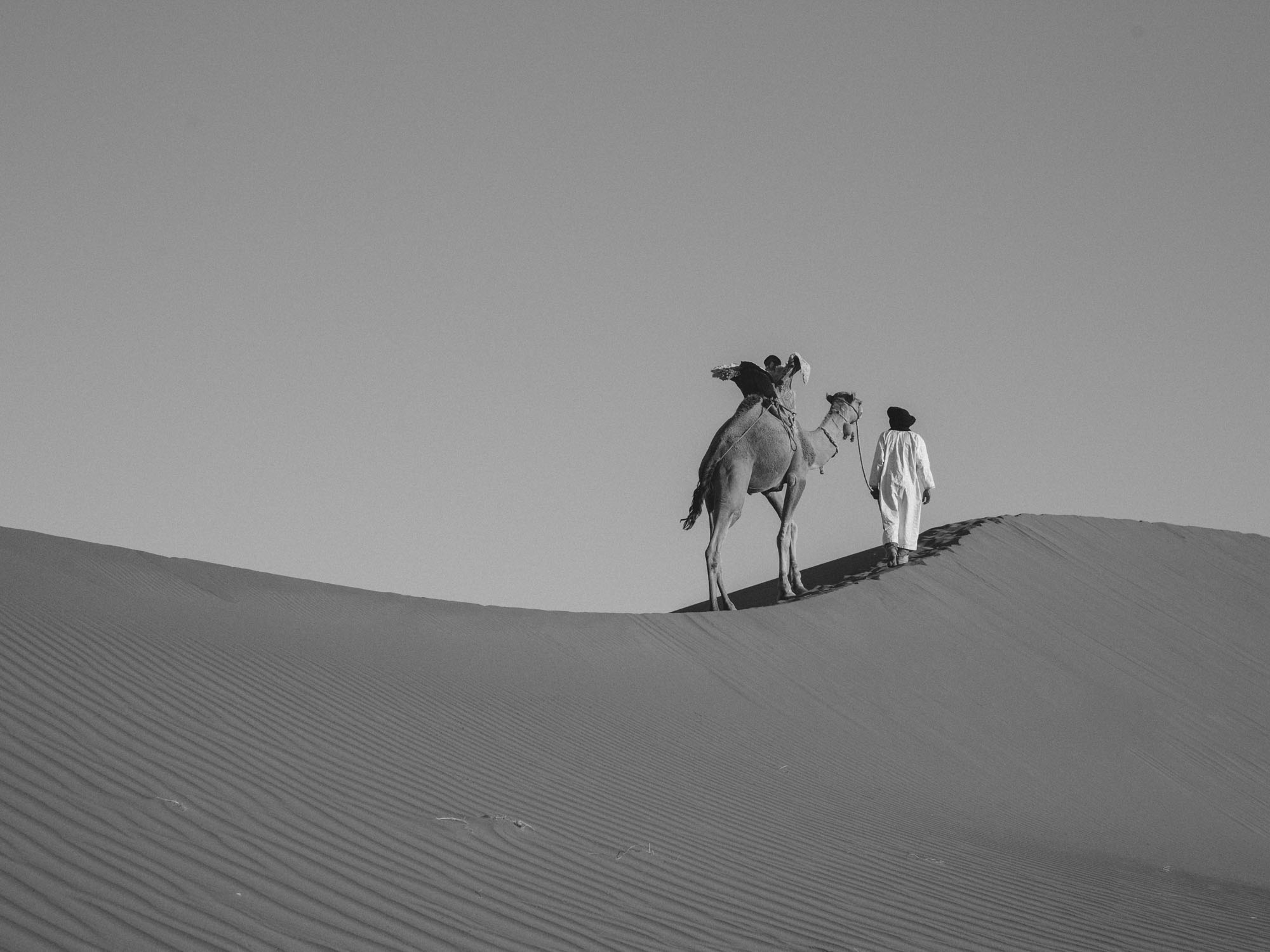 Camel With Berber Guide on Sand Dunes, Black and White Photo