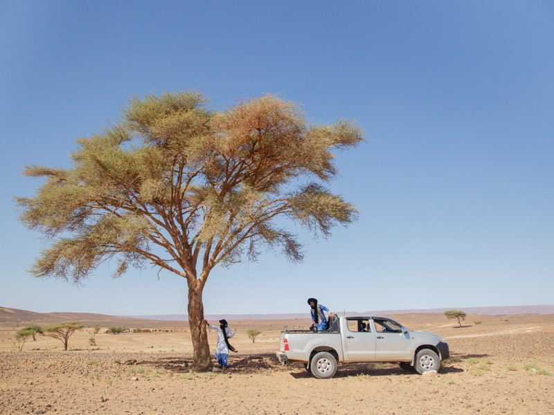 Beldi Tour Guides Resting Under Shade of Tree With 4x4 Tour Vehicle