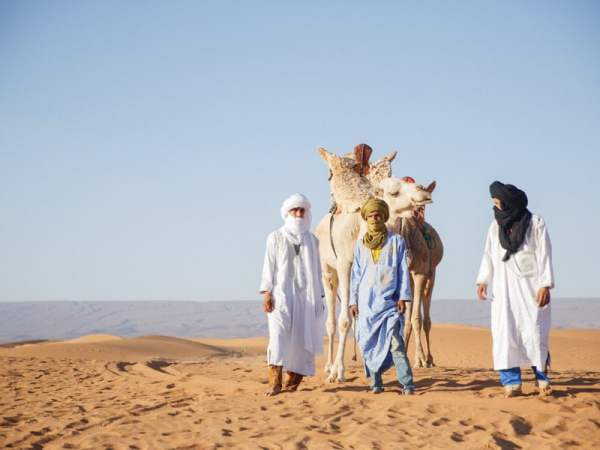 Three Berber Guides With Camels in Morocco Desert