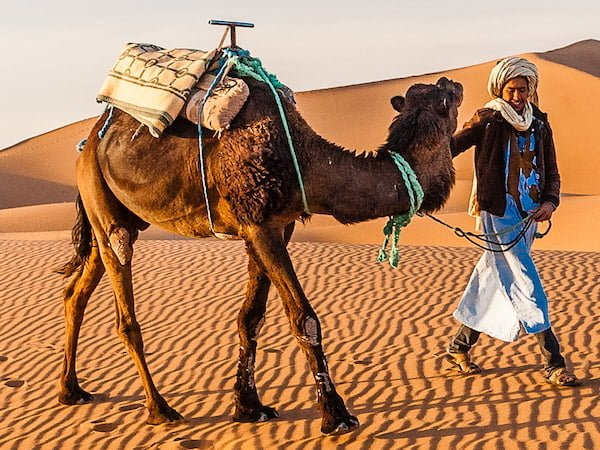 Berber Guide with Camel Trekking through the Sahara Desert