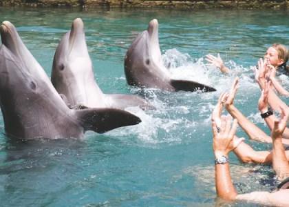 Family Fun in the Sun: Water Activities