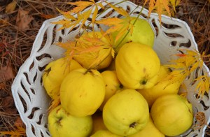 Bowl of Quinces