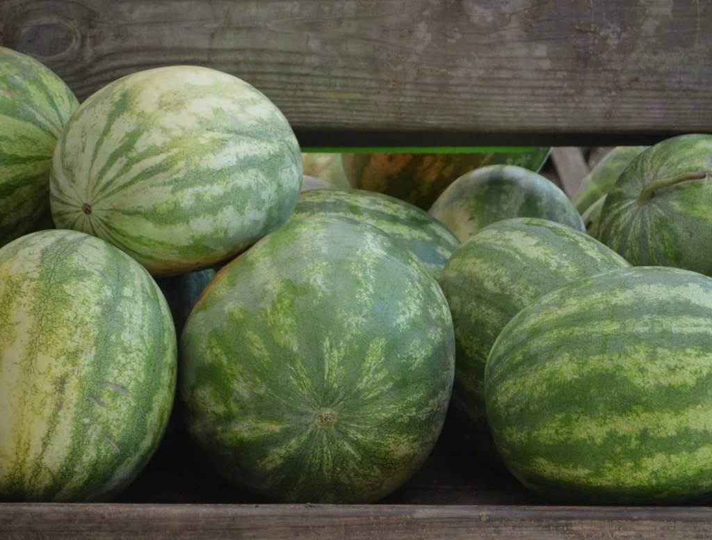 Watermelons on Bench at Rosebank Farms, SC