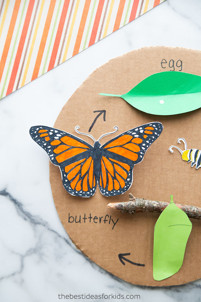 3D butterfly life cycle craft