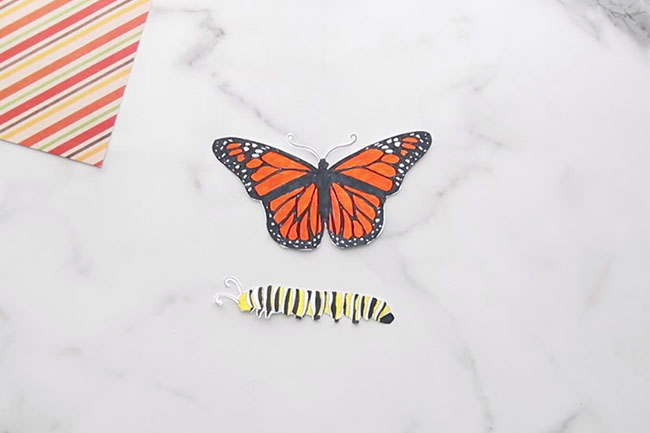 Color in Butterfly Life Cycle Template