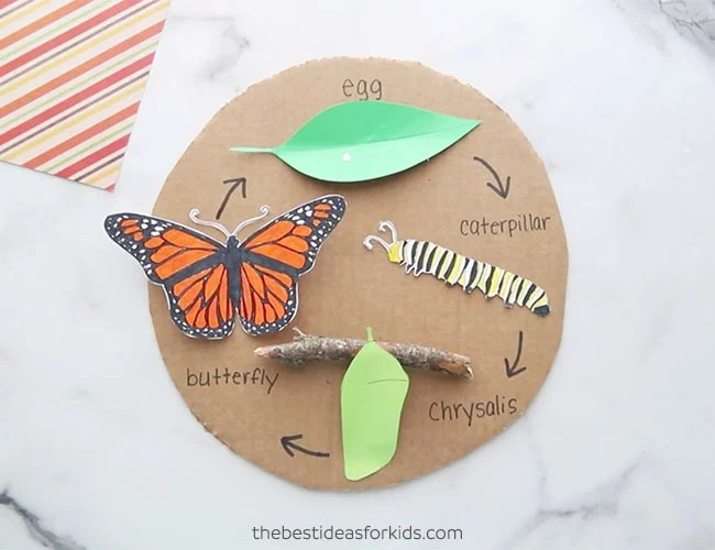 Free Printable Butterfly Life Cycle Craft