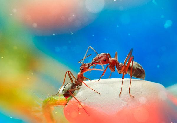 Bokeh Macro Insect Photography