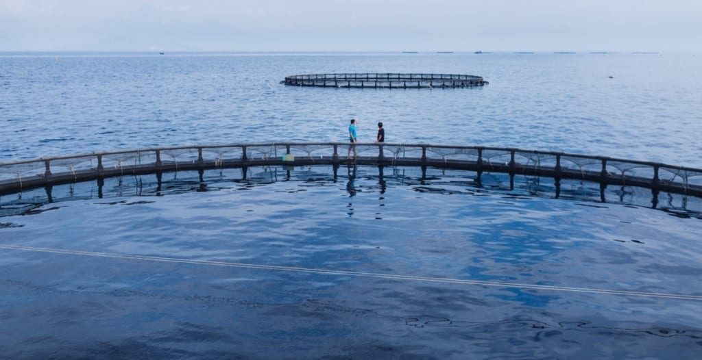 Australis Aquaculture Sustainability