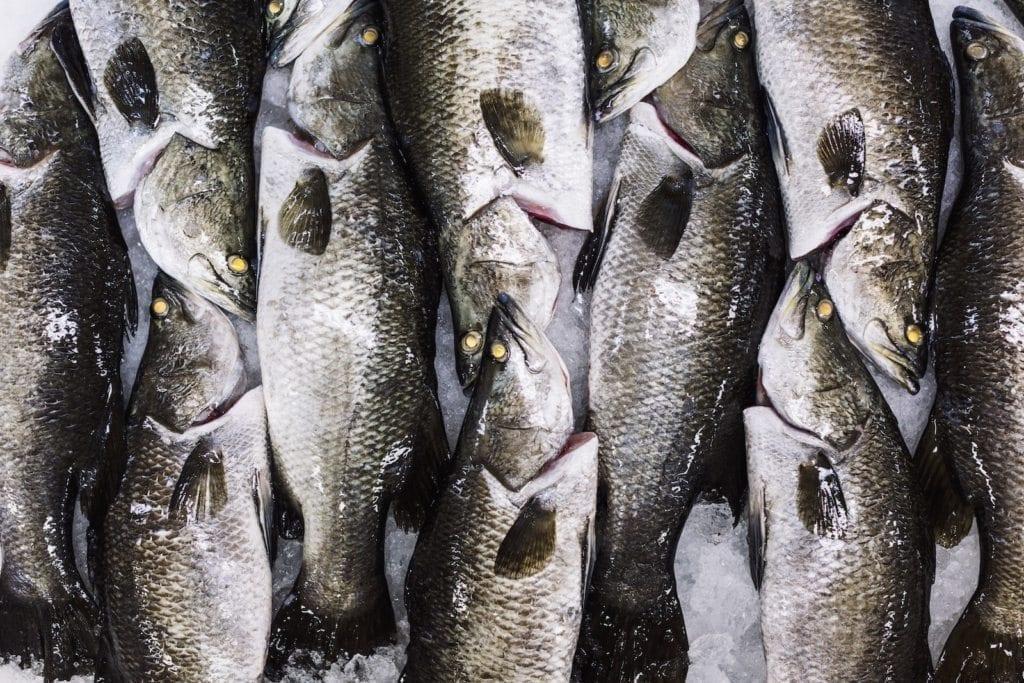 Australis Barramundi_Buying_Sustainable_Fish