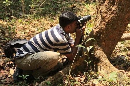 12-jose-photographing-the-malabar-pit-viper-yellow-morphjose-photographing-regenration-of-bamboo