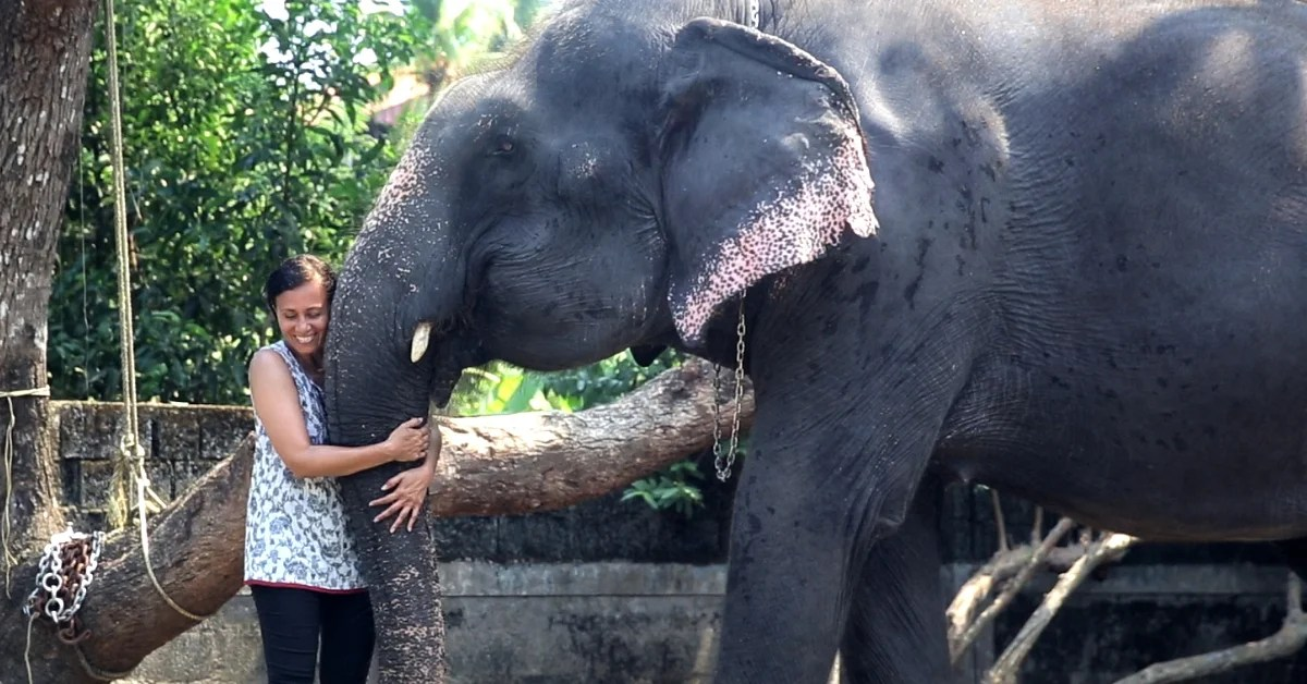 Kerala Lady's Love for Animals Makes Her Different-Suleiman